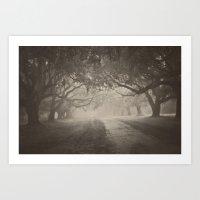 Avenue Of Oaks Art Print