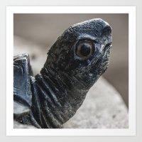turtle Art Prints featuring Turtle by MehrFarbeimLeben