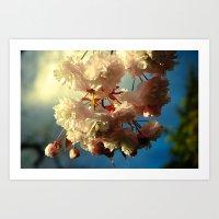 Cherry Blossoms In Hood … Art Print