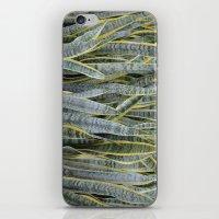 Snake Plants iPhone & iPod Skin