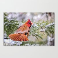 Christmas Cardinal. Canvas Print