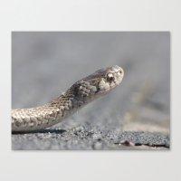 Snake 2016 II Canvas Print