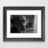 Black Labrador Portrait Framed Art Print