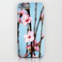 Pretty Pink Peach Petals iPhone 6 Slim Case