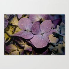 Drops Canvas Print