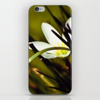 Shyness iPhone & iPod Skin