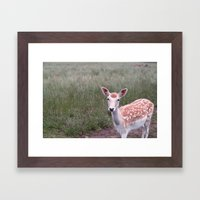 Sika Deer Framed Art Print