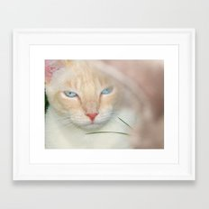 Prince Willy Framed Art Print