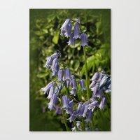 Spanish Bluebells Canvas Print