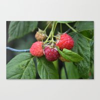 Raspberries Canvas Print