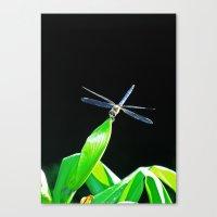 Dragon Tipped Canvas Print