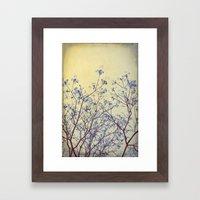 Dogwood Tree In Flower -… Framed Art Print
