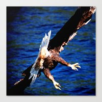 Eagle: The Back Side Of … Canvas Print