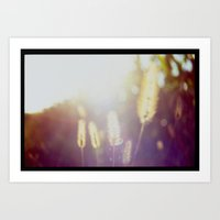 Evening Light In The Fie… Art Print
