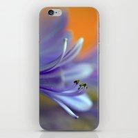 Blue Agapanthus 2786 iPhone & iPod Skin