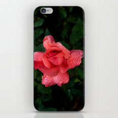A rose after the rain iPhone & iPod Skin