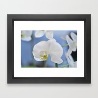 White Phalaenopsis Framed Art Print