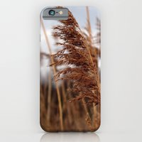 iPhone & iPod Case featuring stay in the wind. by zenitt