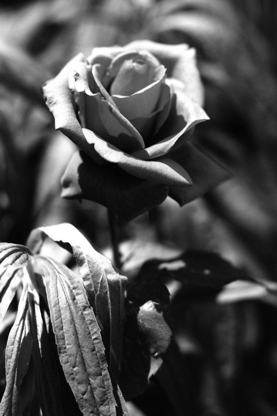 Flower black and white Art Print