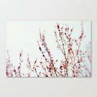 Red Blossom 2 Canvas Print