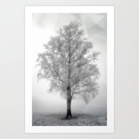 Birch In Winter  Art Print