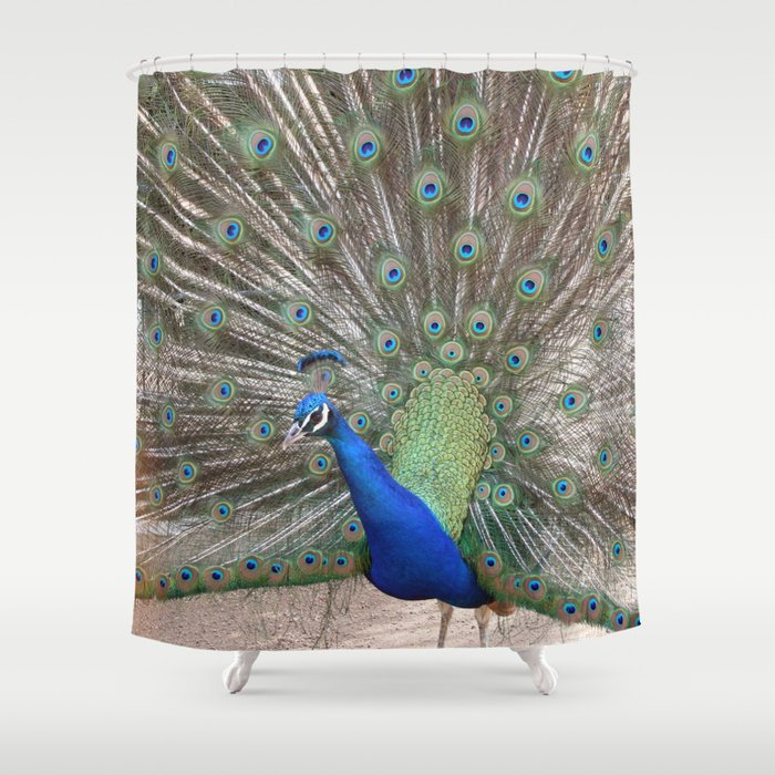 Beautiful Peacock Shower Curtain By Mehrfarbeimleben