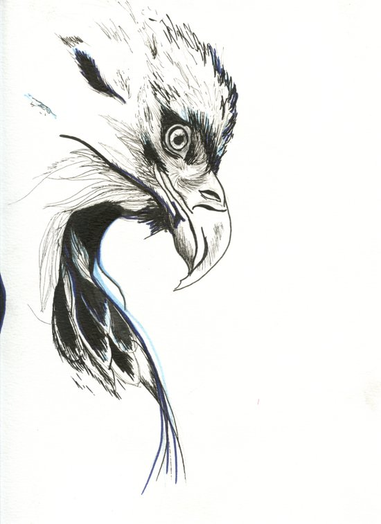 War Eagle Canvas Print