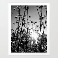 Black and white Daisy garden 5 Art Print