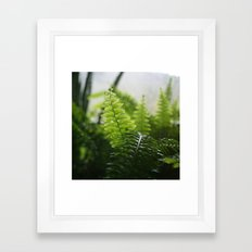 Photosynthesis Framed Art Print