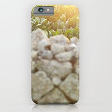 Sunset over a Mediterranean field and a dry stone wall Photo for Interior Design Slim Case iPhone 6s