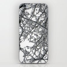 Snow Covered Branches iPhone & iPod Skin