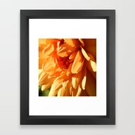 Vermont Autumn Golden Fl… Framed Art Print