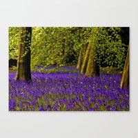 A Walk in Bluebell Wood Canvas Print