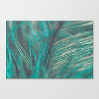 Turquoise Feather Close Up Canvas Print