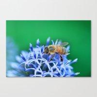 Bee & Flower Canvas Print