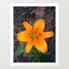 Lily 1 Art Print