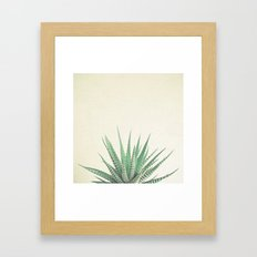 Haworthia Framed Art Print