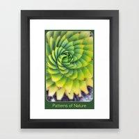 Patterns Of Nature - Suc… Framed Art Print