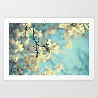 white magnolia Art Print