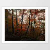 Autumn In The Woods 3 Art Print