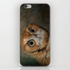 Portrait of An Eastern Screech Owl iPhone & iPod Skin