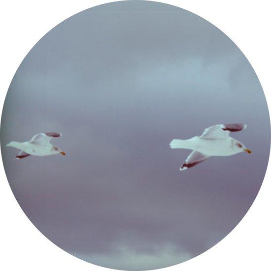 2 seagulls Art Print