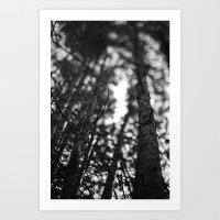 through the tree line. Art Print