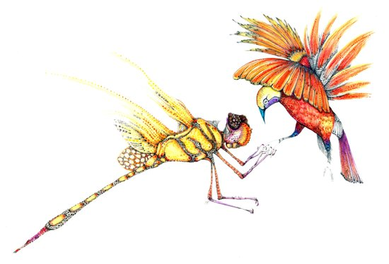 Holiday drawings:  Dragonfly & Bird of paradise  Art Print