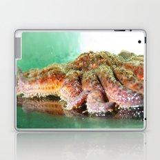 Sunflower Sea Star Laptop & iPad Skin