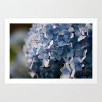 Hydrangea In Blue Art Print