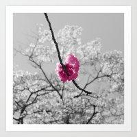 Sakura Blossom Art Print