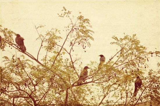 birds in trees Art Print