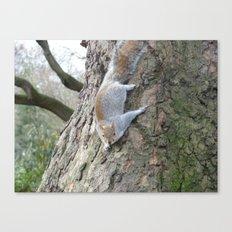 Squirrel Gymnastics Canvas Print