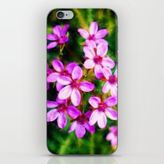 Spring Sweetness iPhone & iPod Skin
